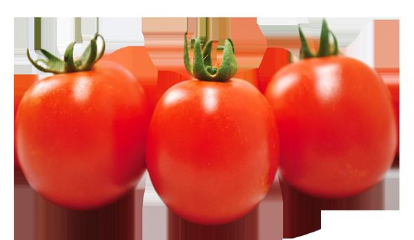 チャコ オーガニックなミニトマト 自然農法センターのタネは自然農法・有機栽培・家庭菜園に向いてます