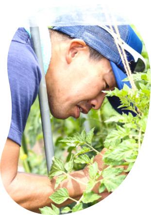 自然農法センター 自然農法・有機農業のタネブリーダー・育種家 原田晃伸 原田の兄さん