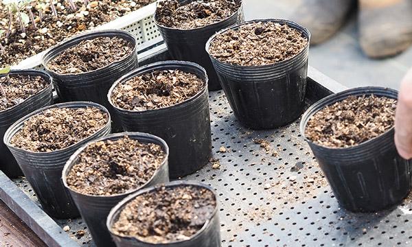 土・ポットの準備とタネ撒き 自然農法センターのタネ 美味しいミニトマト チャコ