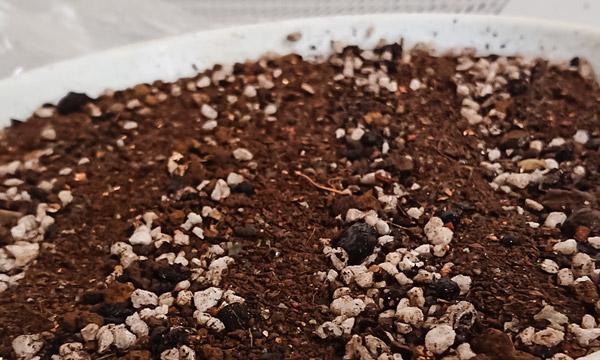 ミライタネはミライに生まれる自然のタネです オーガニック、自然農法、有機栽培に適した自然農法センターのタネ